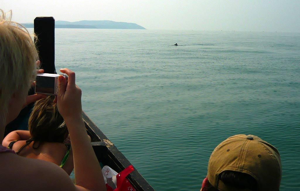 dolphin spotting near Butterfly beach in Goa